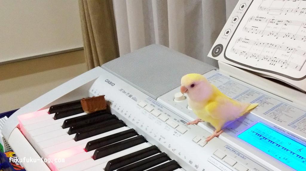 ピアノとインコ