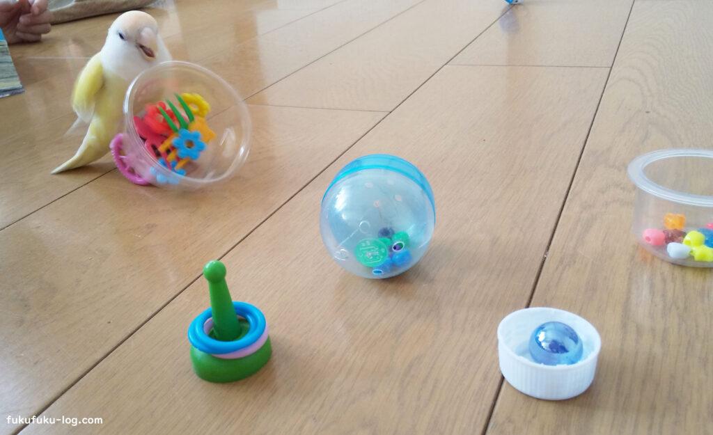 おもちゃで遊ぶインコ